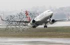 Аеропорти хочуть перетворити дронів на пастухів для пташиних зграй