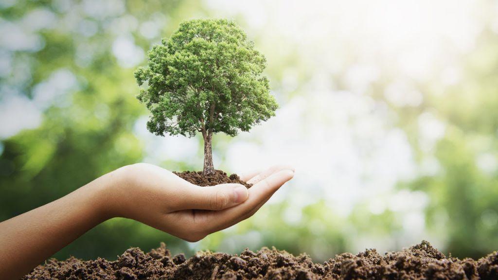Висадити 1 трлн дерев. Чудово? Не зовсім